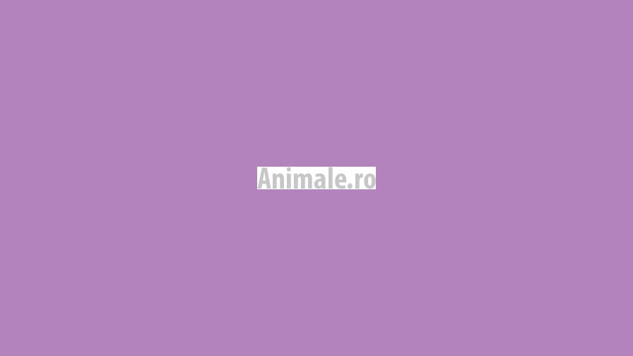 Animale.ro portfolio project